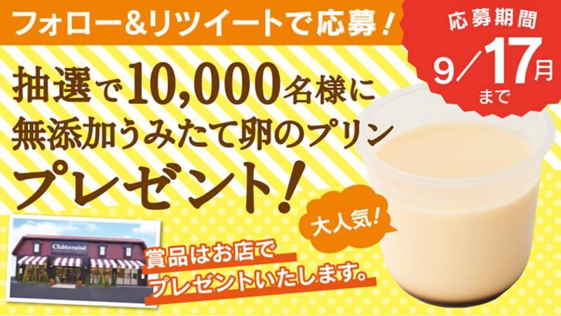 シャトレーゼの「無添加うみたて卵のプリン」が抽選で3万名にその場で当たる。