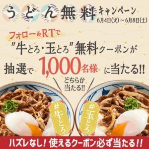 丸亀製麺で牛とろ、玉とろうどんのどちらか無料クーポンが抽選で1000名にその場で当たる。〜6/8。