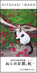 銀座でねこ展が無料。岩合光昭写真展、「ねこの京都、秋」。8/26~11/1。